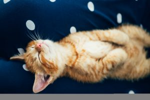 Cute ginger kitten sleeps