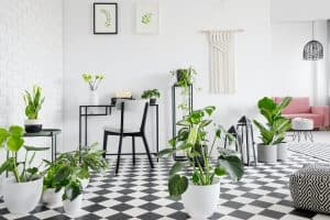 Plants on checkered floor in living room interior with posters a