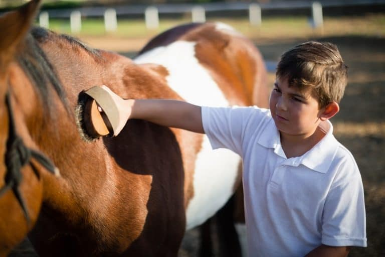 Boy grooming the horse in the ranch