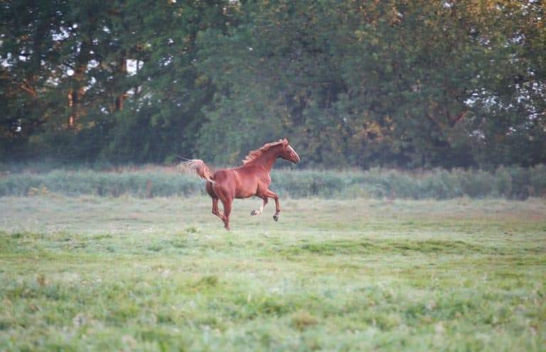 galloping horse on pasture