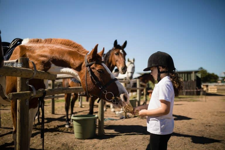 Girl feeding the horse in the ranch