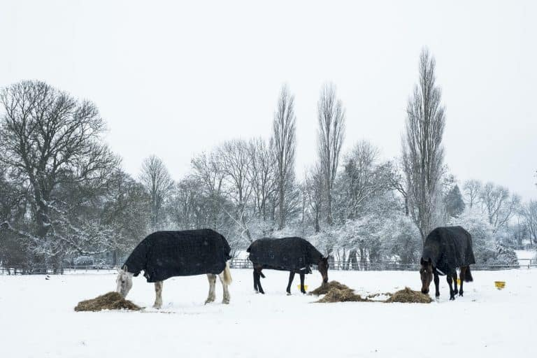Three horses wearing horse blankets standing in a snow-covered paddock, eating hay.